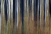 Landschaftsschutzgebiet  Blanský les 10-2008 und 02-2010