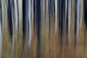 CHKO Blanský les 10-2008 a 02-2010