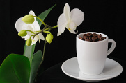 coffee and orchid 02-2013