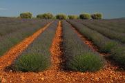 Francie - Provence 06-2013 II.část