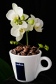 Tasse Kaffee mit Orchidee 01 und 02-2014