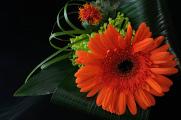 oranžová gerbera 06-2014