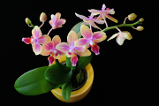 orchid flowers and bouquets 09-11-2016