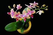 Orchideenblüten und Blumensträuße 09-11-2016