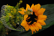 sunflower 02-2017