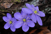 spring flowers 03-2017