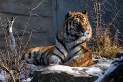 Zoo Ohrada Hluboká nad Vltavou 12-2017