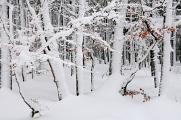 NP Šumava 02-2018 zimní les