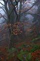 Protected Landscape Area Blanský les