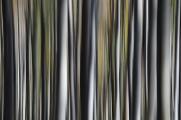 bukový les I