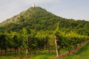 vinice v NPR Děvín s hradem Děvičky