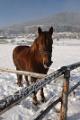 kůň na Hojné Vodě I