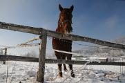 kůň na Hojné Vodě II