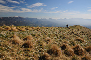 šafrány cestou na Monte Serva