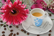 espresso a gerbera I