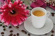 espresso a gerbera II