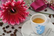 espresso a gerbera III