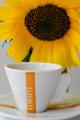 šálek na espresso Corsini a slunečnice
