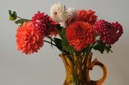 kytice jiřin ve váze
