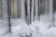 zimní les III