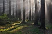 les pod Kraví horou II