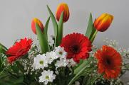 gerbery a tulipány II