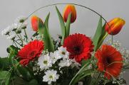 gerbery a tulipány III