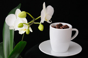 kávová zrnka a orchidej I
