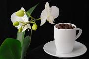 kávová zrnka a orchidej II