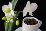 kávová zrnka a orchidej III