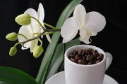 kávová zrnka a orchidej IV