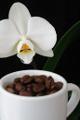 kávová zrnka a orchidej V