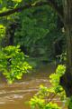 lužní les na Malši IV