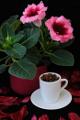 gloxínie a kávový porcelán se zrnky kávy II