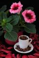 gloxínie a kávový porcelán se zrnky kávy I