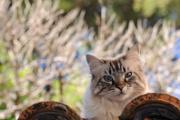 kočka v Riez