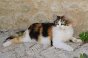 kočka ve Forcalquier