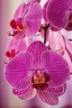 orchideje II