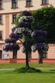 květinová výzdoba před radnicí