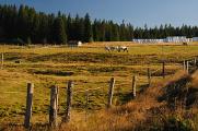 Horská Kvilda - koně na pastvě