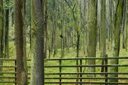 křivoklátská lesní obora