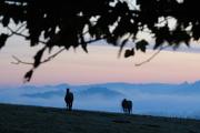 koně na Pastevním vrchu