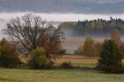 Pastevní vrch - stromy v údolní mlze