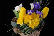 vázaná kytice - narcis, tulipán, frézie a kosatec IV