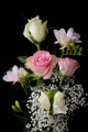 růže a frézie IV