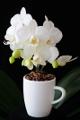 šálek na espresso Jura a orchidej X
