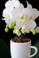 šálek na espresso Jura a orchidej XI