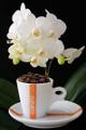 šálek na espresso Corsini a orchidej XII