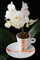 šálek na espresso Corsini a orchidej XIII