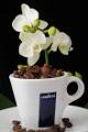 šálek na espresso Lavazza a orchidej I